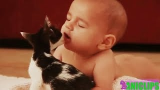 Babies Annoying Cats - Have fun during the day