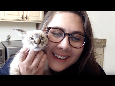 Live Kitten Q&A – Stacy & Pipsqueak
