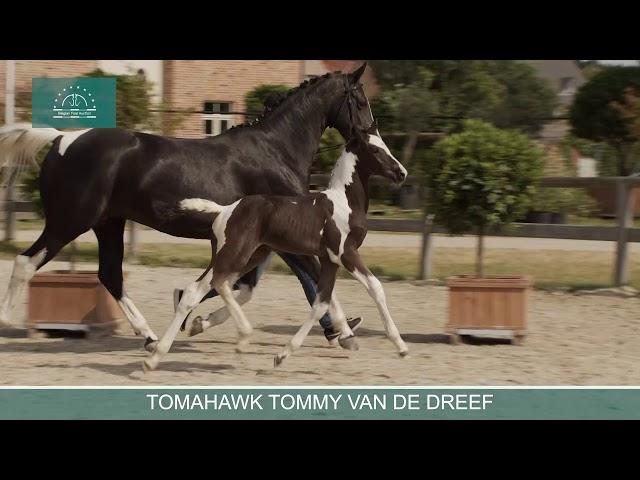 TOMAHAWK TOMMY VAN DE DREEF