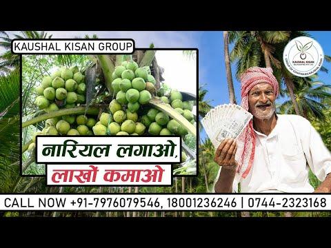 Organic Coconut Plant