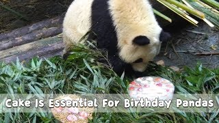 Cake Is Essential For Birthday Pandas  | iPanda