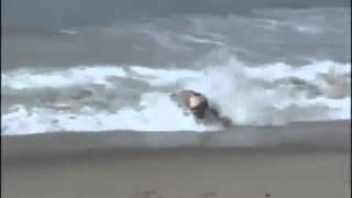 drunk guy attempts to surf big wave and dies