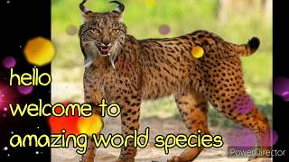 #lynx #cat  #endangered | most Endangered species lynxcat | amazing facts about lynx