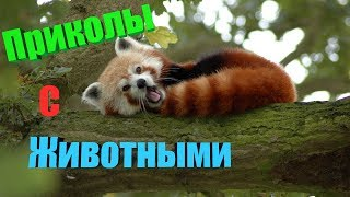 ЗАБАВНЫЕ ЖИВТОНЫЕ # 1 Подборка смешных и интересных видео с животными на ПРИКОЛ