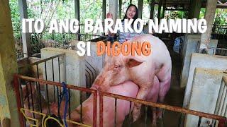 Update!!! 3 days pa lang kinastahan na sa barako naming si Digong mga ka-oink2x | TERZAGHI TV