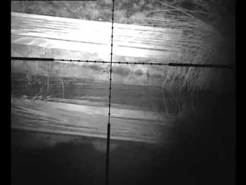 night vision rat shooting on fishing pond