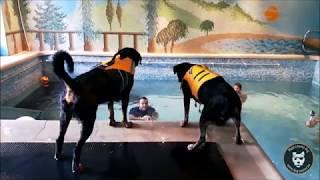 Dog Pool : les bienfaits d'une petite nage !