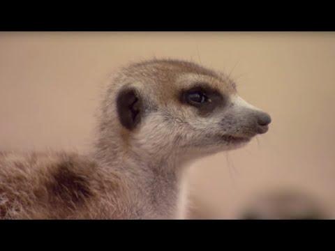 How to Speak Meerkat