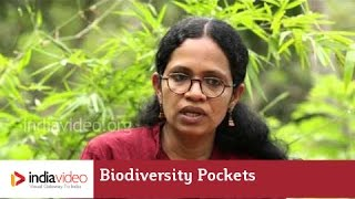 Biodiversity Pockets Of Western Ghats