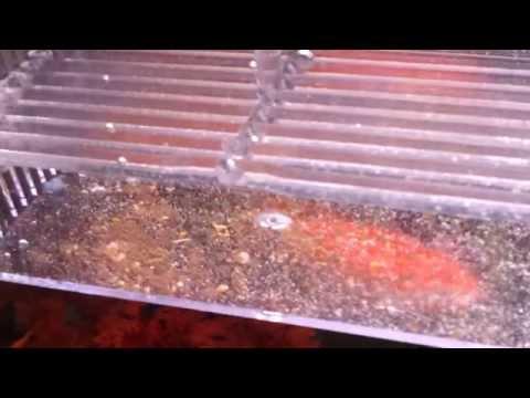 I vermi possono influenzare posti