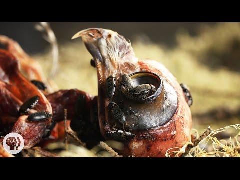 Terrier worm na kung paano kunin