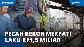Pecah Rekor! Merpati Laku Seharga Rp1,5 Miliar di Pekalongan, Pembelinya Bos dari Jakarta