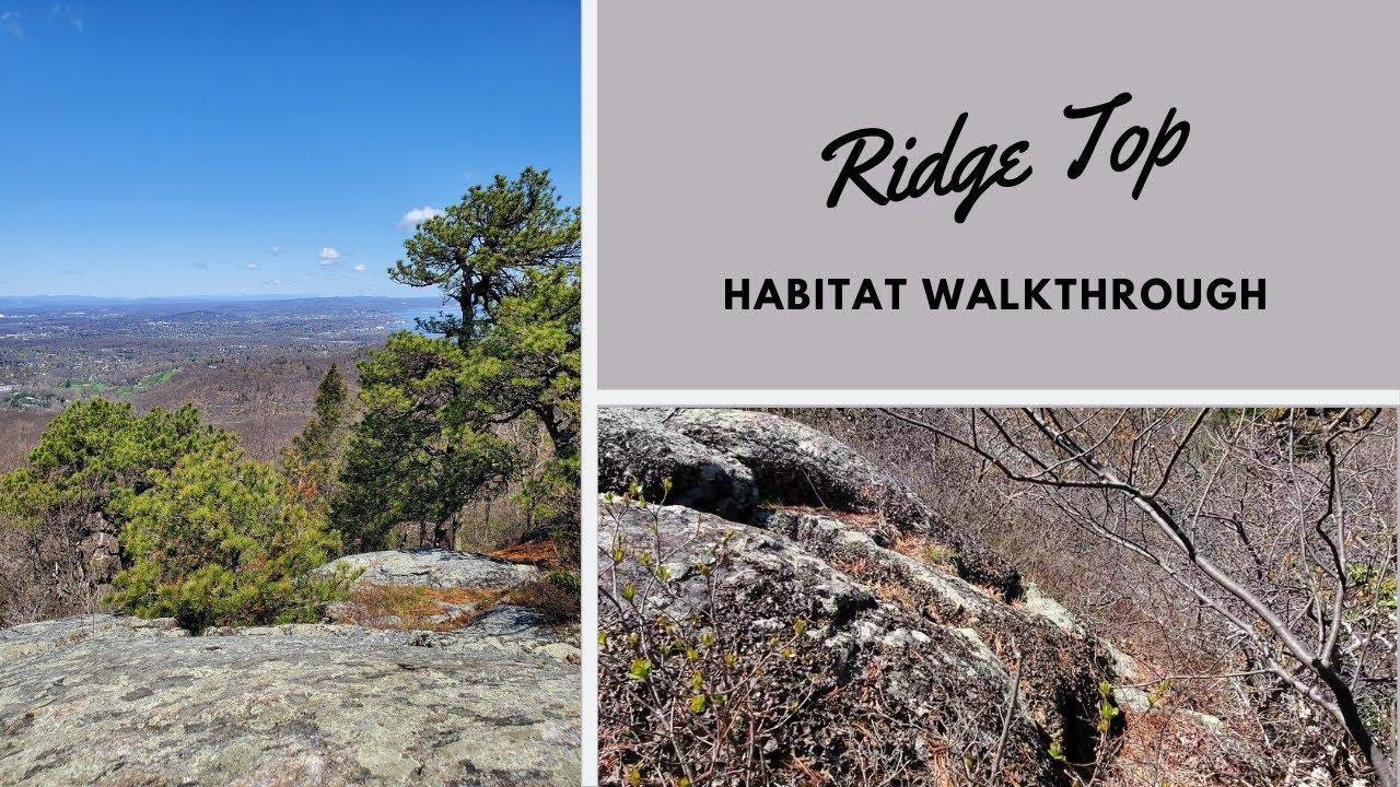 Habitats: Ridge Top
