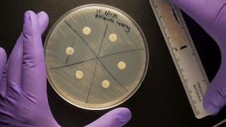 ID Laboratory Videos: Antibiotic susceptibility testing
