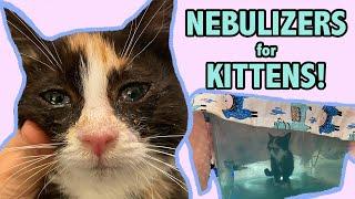 Nebulizer Treatment for a Sneezy Kitten