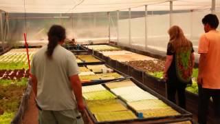 Acuaponía para la Producción de Truchas y Hortalizas - Diaguitas