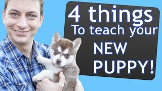 4 Things to Teach your NEW PUPPY Right Now!