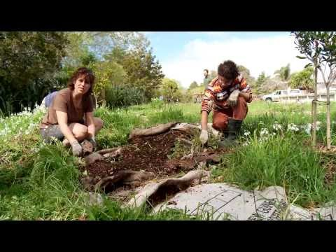 Project Twin Streams: Growing food and growing community