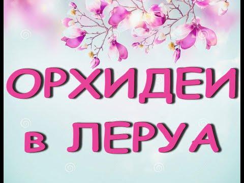 """ЛЕРУА:неожиданный ЗАВОЗ ОРХИДЕЙ!01.09.21,ТЦ """"Космопорт"""",Самара."""