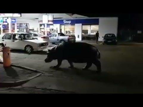 Seekoei soek petrol
