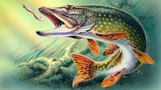 Картинки с рыбалки на природе