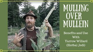 Mulling over Mullein | Benefits and Uses with Yarrow Willard (Herbal Jedi)