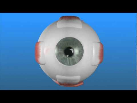 Látás, amikor egy szemmel néz