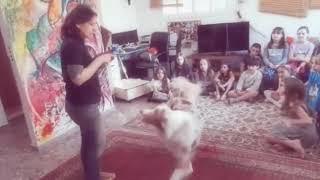 הפעלת ימי הולדת - להיות מאלף כלבים ליום אחד