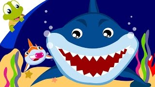 Baby Shark Song | Animal Songs With Lyrics
