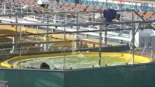 Costa Concordia: New video of the inside of sunken cruise ship ...