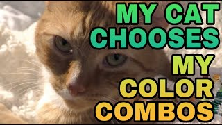 My Cat Chooses My Color Combos | Alex's Innovations
