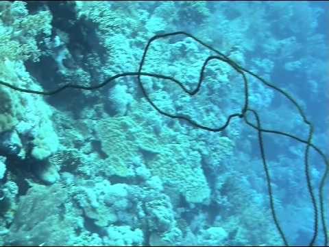 Tauchgang am Daedalus Riff, Daedalus Riff,Ägypten