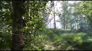 Пожары в Костанае из-за пуха