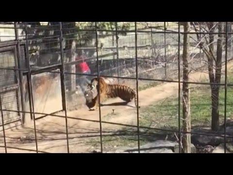 驚險一刻!老虎突然發難攻擊美少女!下一秒卻發生驚人一