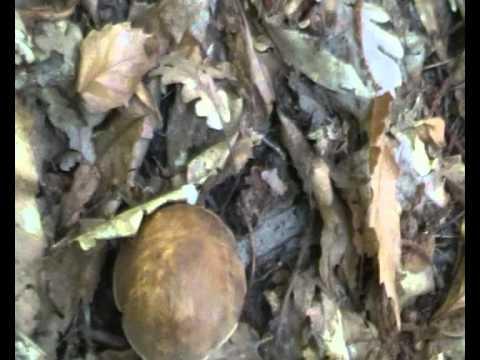 Flukonazol un metodo di applicazione a un fungo di unghia