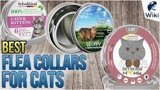 5 Best Flea Collars For Cats 2018