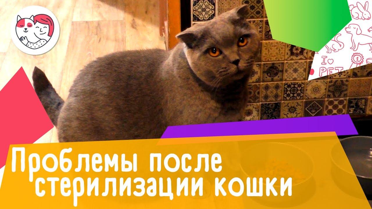 4 проблемы, которые могут возникнуть во время и после стерилизации кошки
