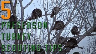 5 Preseason Turkey Scouting Tips!