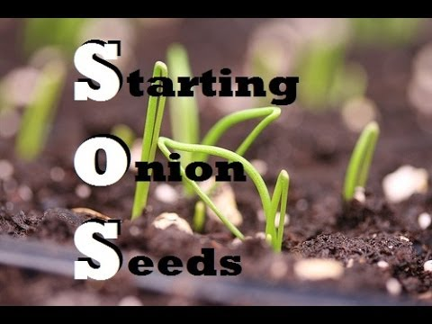 , title : 'How to Start Onions Indoors - Growing from seed