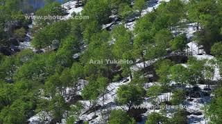 ブナ林の動画素材, 4K写真素材