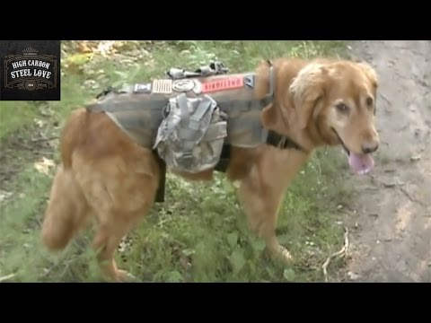OneTigris Tactical Dog Training MOLLE Vest And Bungee Leash Review