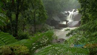 We stopped in to check out the some of the great natural experiences that can be enjoyed in Tropical North Queensland. We started in Cairns and went out for a trip to the Great Barrier Reef.