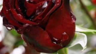 Jim Reeves   _quot_Roses Are Red My Love.mpg.AVI