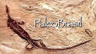 PaleoBrasil Introduction by Alexander Keller