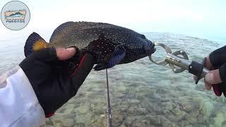 Рыбы для рыбалки на мальдивах