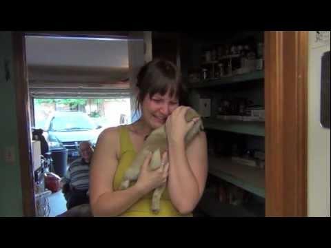 Mies yllättää tyttöystävänsä – eteisessä odottaa uusi koiranpentu
