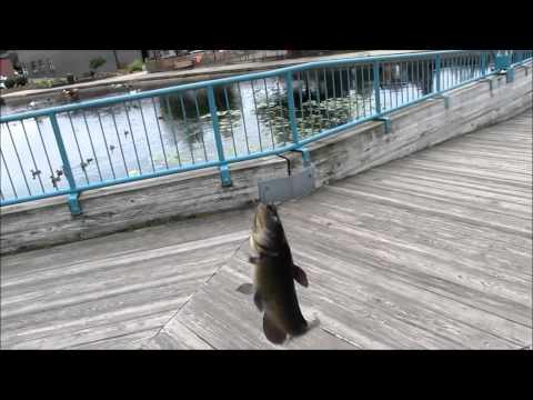 Bullhead Fishing at the Brighton Mill Pond