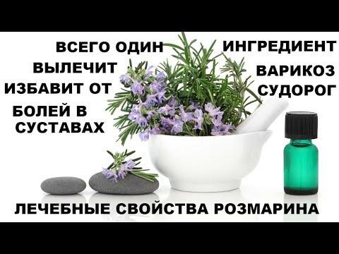 ВЫЛЕЧИТ ВАРИКОЗ,ИЗБАВИТ ОТ СУДОРОГ,БОЛЕЙ В СУСТАВАХ. Лечебные свойства розмарина