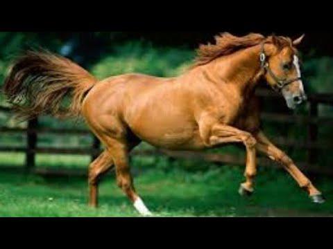 Лошадь Энциклопедия животных
