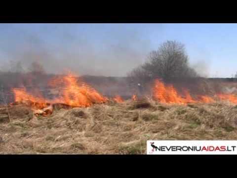 Riebalų deginimas nootropinis